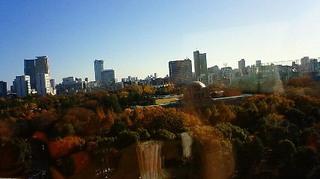 師走の紅葉 新宿御苑 201112041353000.jpg