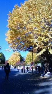 師走の紅葉 上野公園 201112101021000.jpg