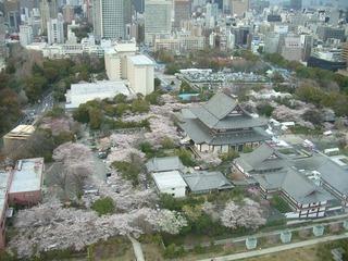 増上寺桜2012 152.JPG