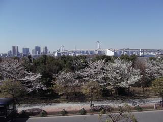 桜 増上寺 千鳥ヶ淵 001.JPG