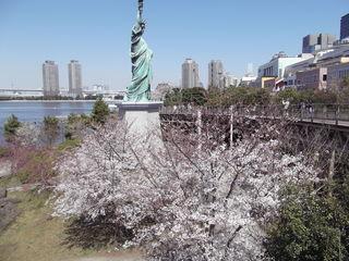 お台場桜と自由の女神像   増上寺 千鳥ヶ淵 008.JPG