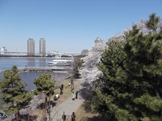 お台場桜と海   増上寺 千鳥ヶ淵 011.JPG