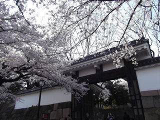 千鳥ヶ淵桜 増上寺 千鳥ヶ淵 024.JPG