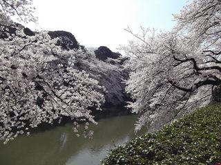千鳥ヶ淵桜 増上寺 千鳥ヶ淵 079.JPG