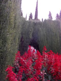 アルハンブラ宮殿庭園DSCF0504.JPG